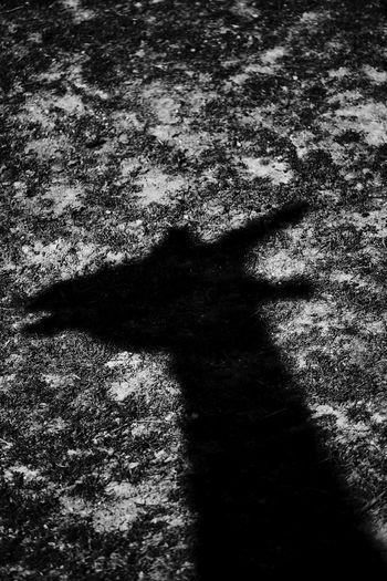 Cerz Shadow