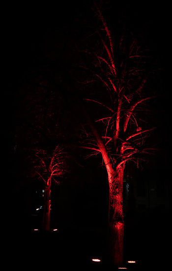 Tree Night Red Celebration No People Illuminated Nature Black Background Plant Dark Event Firework Outdoors Motion Sky Tree Trunk Trunk Spooky Studio Shot Firework - Man Made Object Piazza Della Scala Milano