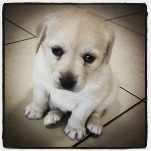 Puppy Pets Dog Littledog Lovemelovemydog Lovely Cute Dog  Cute Animals Lookatme Letmetakeaselfie One Animal Domestic Animals Portrait Animal Themes Dreamer. Sognatore Tenderness Socute💕 Whynot Whysoserious Helpme Saveme