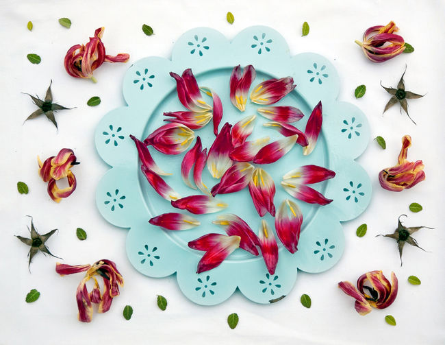 Tulips scattered on a plate Backgrounds Close-up Colorful Decoration Flower Flower Head Freshness Leaf Moodboard Pattern Petal Plate Tulip Turquoise Lieblingsteil