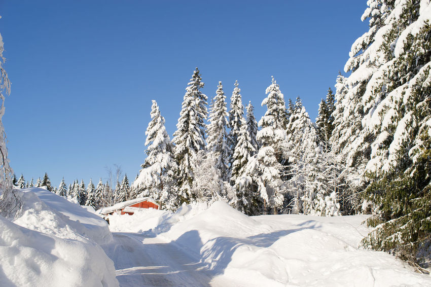 snow covered trees Nature Norway Road Snow ❄ Trees Winter Winter Road Blue Sky Landscape Scenics Snow Snow Covered Snow Covered Trees Snow Day White