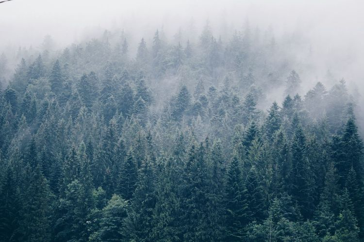 Scenic view of trees during foggy weather