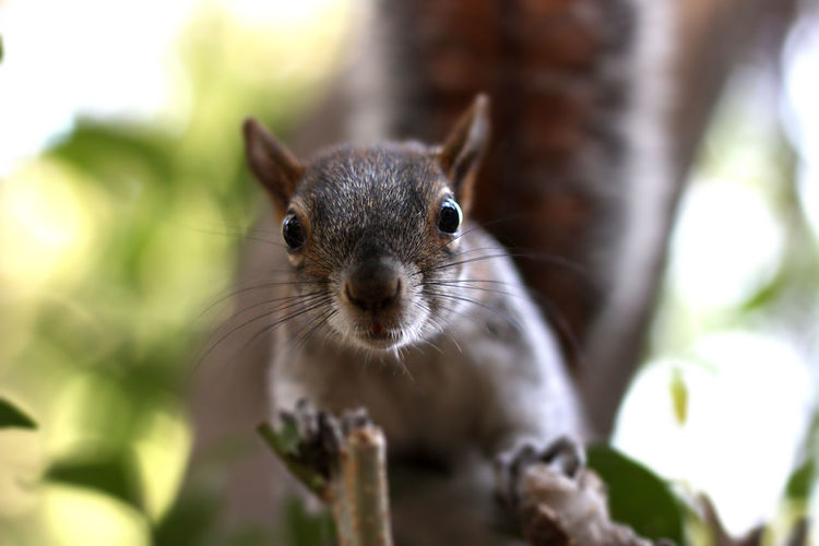 Portrait of squirrel