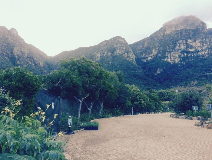 Back of Table Mountain National Park from the car park at Kirstenbosch Botanical garden in Cape Town South Africa Travel Travel Destinations Tourism Tourist Destination Car Park Driveway Shot Winter Time Scenic View South Africa Cape Town Kirstenbosch Botanical Gardens Table Mountain Mountain Tree Beauty In Nature Plant Tranquility Tranquil Scene Scenics - Nature Nature Day Sky Land Non-urban Scene Growth No People Landscape Environment Outdoors Idyllic