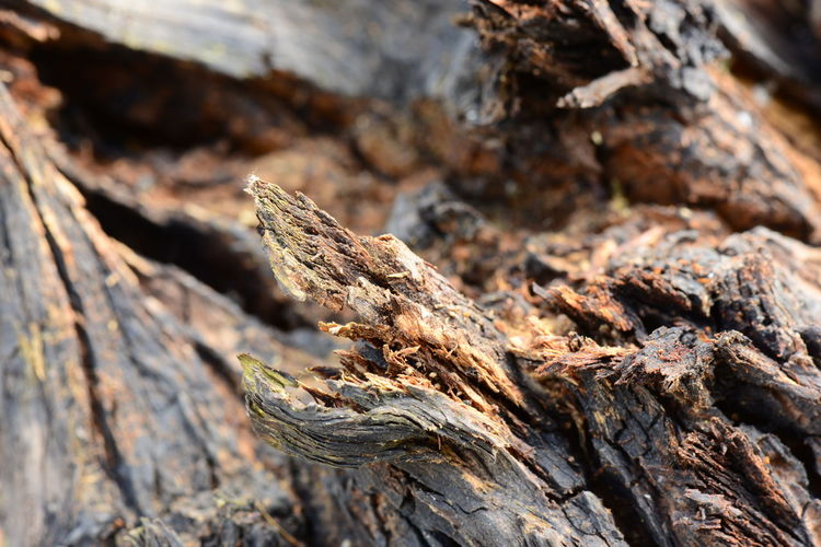Close-up of driftwood on tree trunk