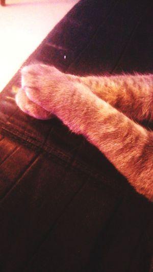 Claws Gato Patita Cat Kitten Claws Cute Human Hand Close-up