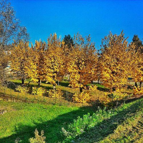 Hello World Autumn Leafs Autumn Leaves Autumn Colors
