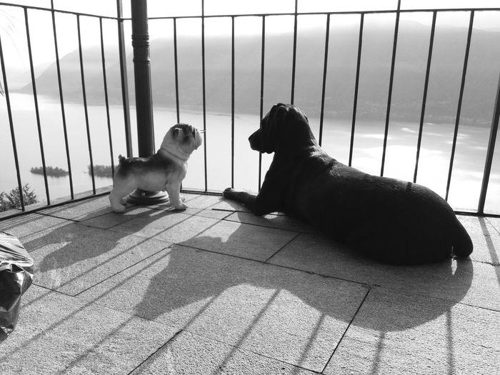 Animal Themes Dog Collection Outdoors No People Samsung J5 Blackandwhitephotography