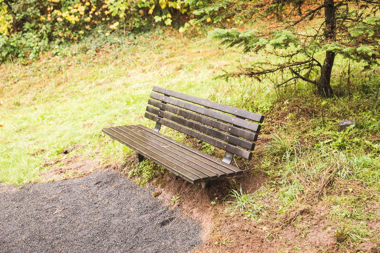 Hoyt Arboretum / Forest Park in Portland, Oregon, USA. Fall time foggy and rainy day. Absence Bench Day Empty Grass Nature No People Outdoors Plant Seat Thick