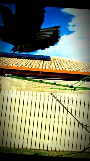 Wow!!😋 Look At This Big Bird Flying In Front Of My House Great View Close Up Shot ❤❤❤