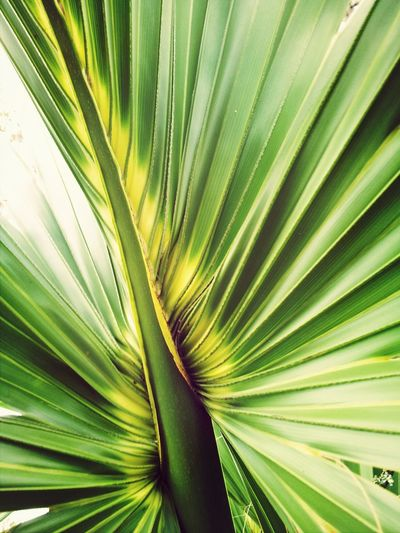 palmetto frond Beautiful Nature Nature Georgia State Parks Skidaway Island Market Bestsellers July 2016 Bestsellers