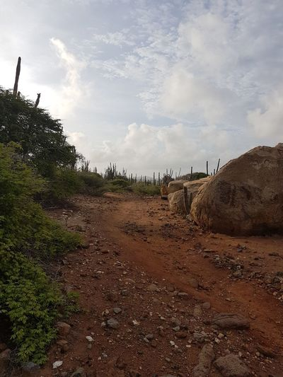 Seroe Crystal Aruba Photography No People Noedit Nofilter Phoneography Samsungphotography Focus On Foreground Love Brown Island Outdoors Cactus Nature Wildlife Sunrise Agriculture Rural Scene Tree Sky Cloud - Sky Dirt Arid Landscape Mud