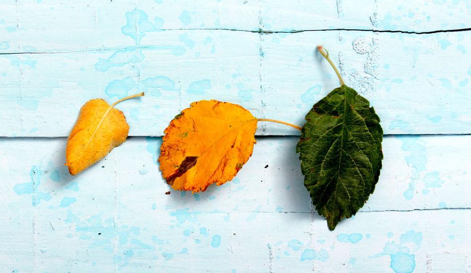Apple Apple Leaves Autumn Autumn Leafs Wood Blue Fall Organic Top View