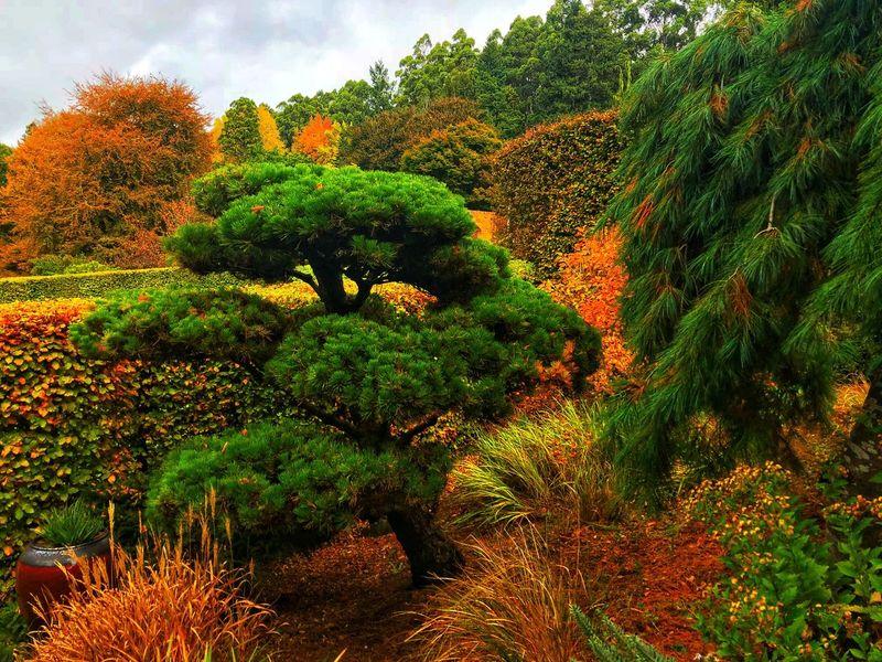 Autumn in Melbourne Orange Color Green Color Trees Visitaustralia Autumn colors Autumn Visitmelbourne