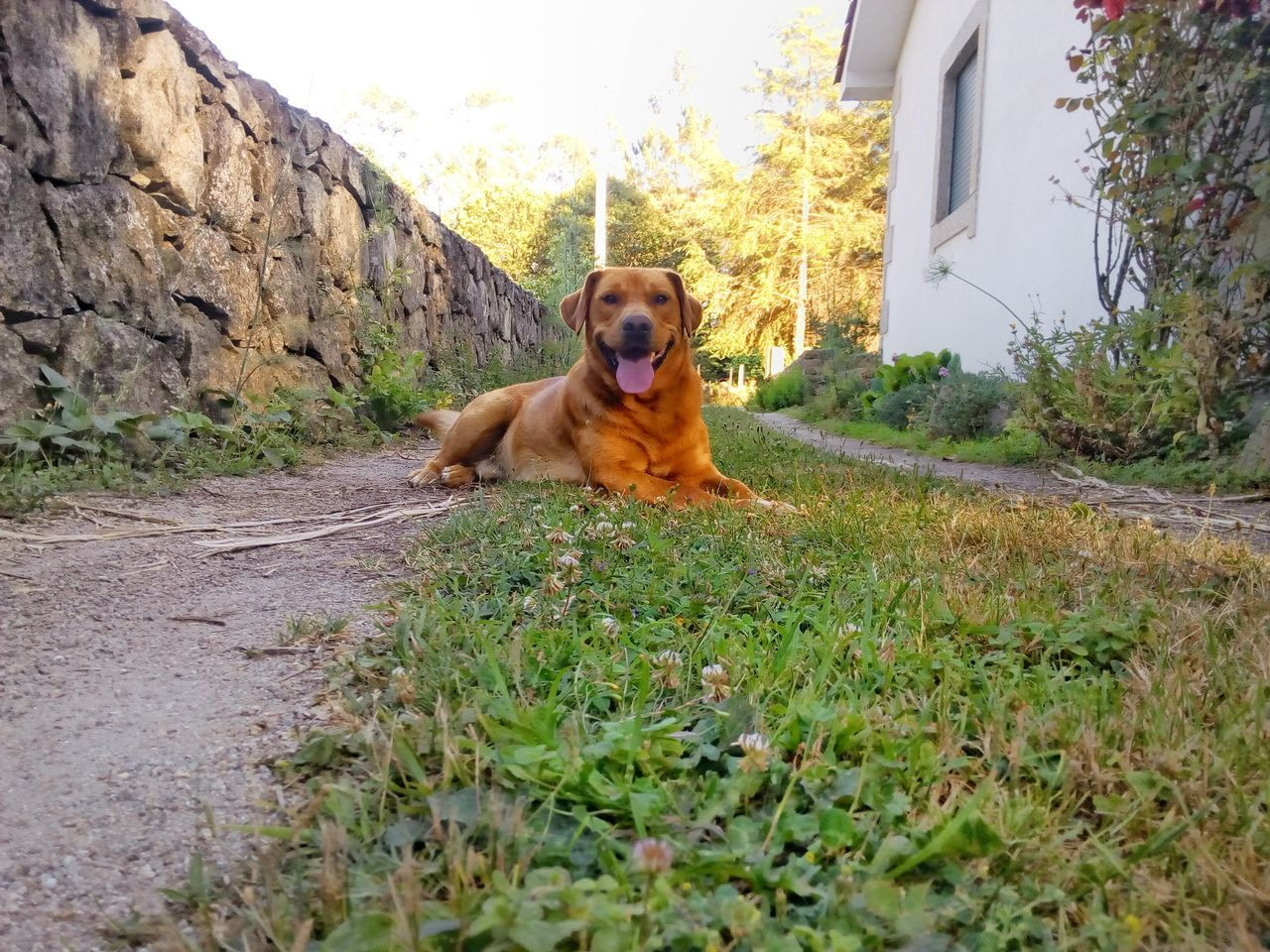 Portrait Of Dog Sitting In Front Of House