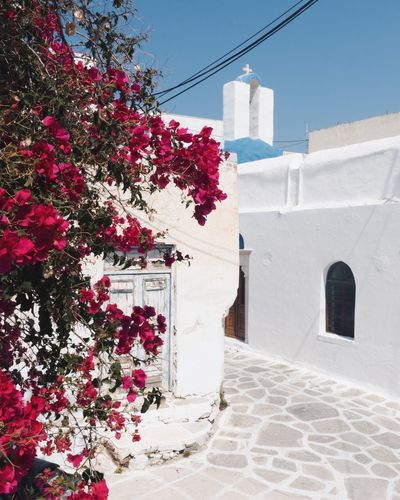 Greece Bougainvillea Church EyeEmNewHere EyeEm Gallery Travel Photography EyeEm Selects Cyclades Vacations Travel Destinations TheWeekOnEyeEM Religion Travel Photography Built Structure Architecture Building Exterior Building Plant Nature Day Flowering Plant White Color Hanging Residential District Wall - Building Feature Sunlight