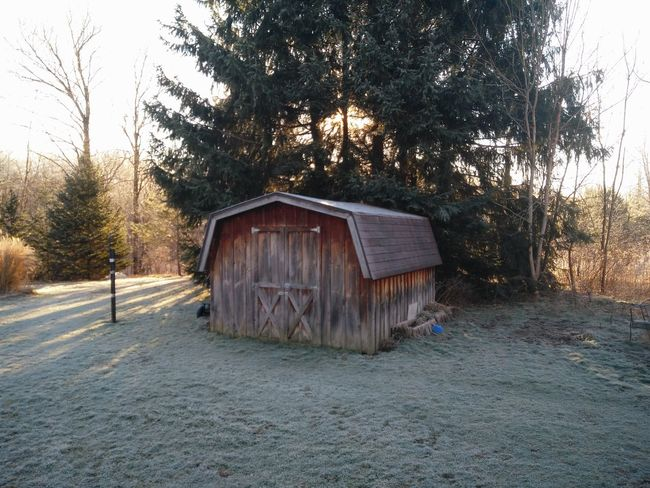 Old barn type shed during sunrise Shed Barn Morning Sky Sunrise Grass Winter Trees