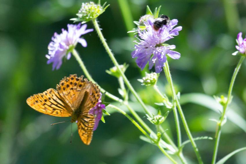 papillon et abeille Animals Macro Relaxing EyeEm Best Shots