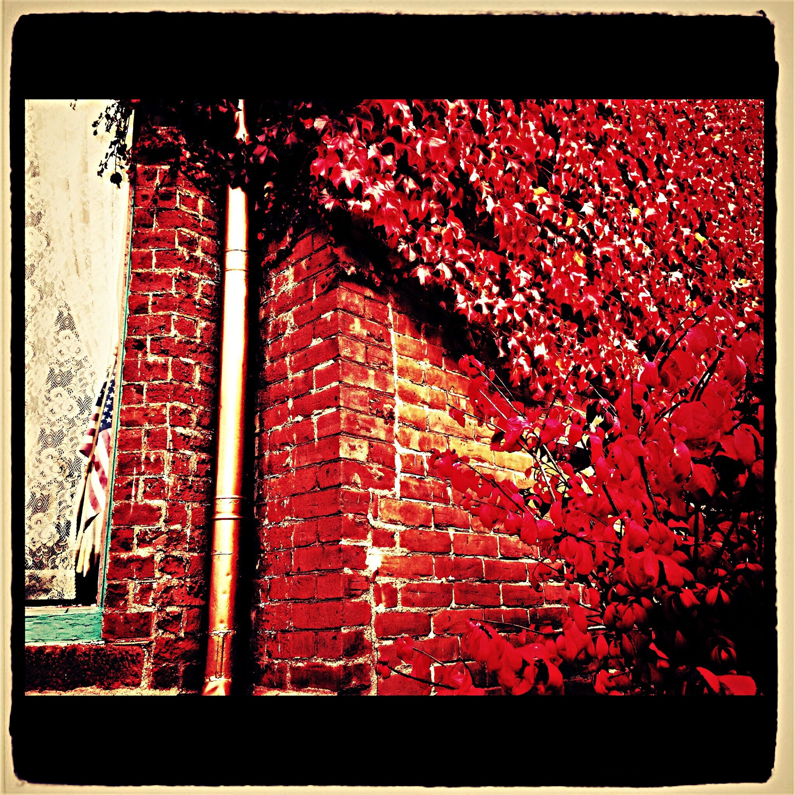 Window Autumn Leaves Building Streetphotography