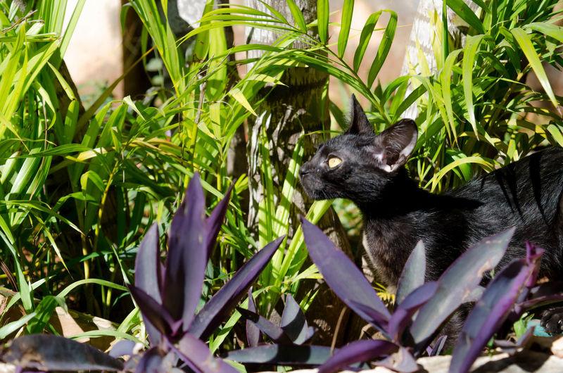 Close-up of black cat between plants