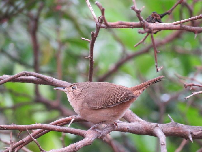 Bird Mourning