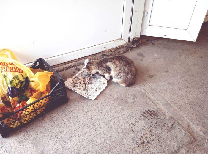 Eating homeless cat Cat Eating Fishes Cat Eating Cat♡ Homeless Cat