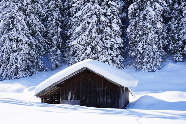 Snow covered house amidst trees and houses