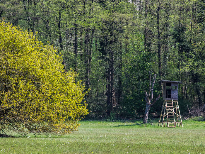 shelter in a field Field Beauty In Nature Day Forest Grass Nature Outdoors Shelter, Duck Blind Tree