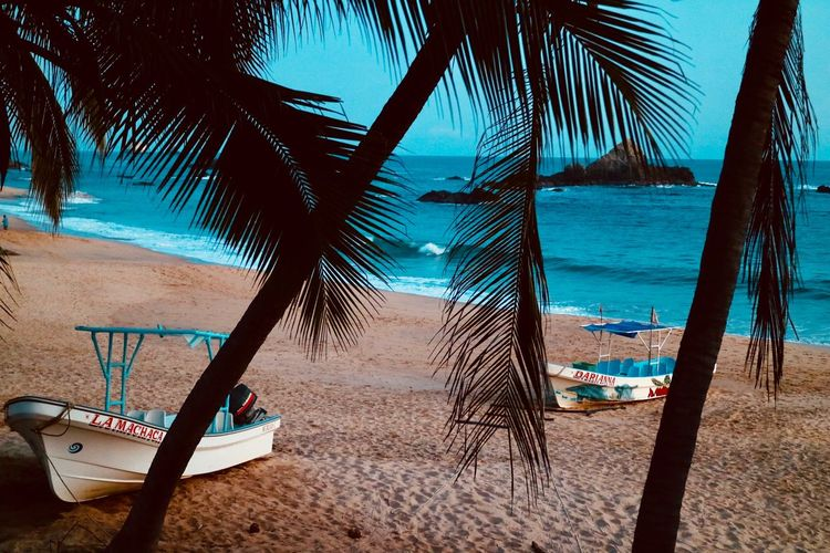 Mazunte Beach Tree Land Water Sand Nature Plant Sea Palm Tree Sunlight No People Tranquility Tropical Climate Sky Beauty In Nature Day Shadow Outdoors Tranquil Scene Trunk