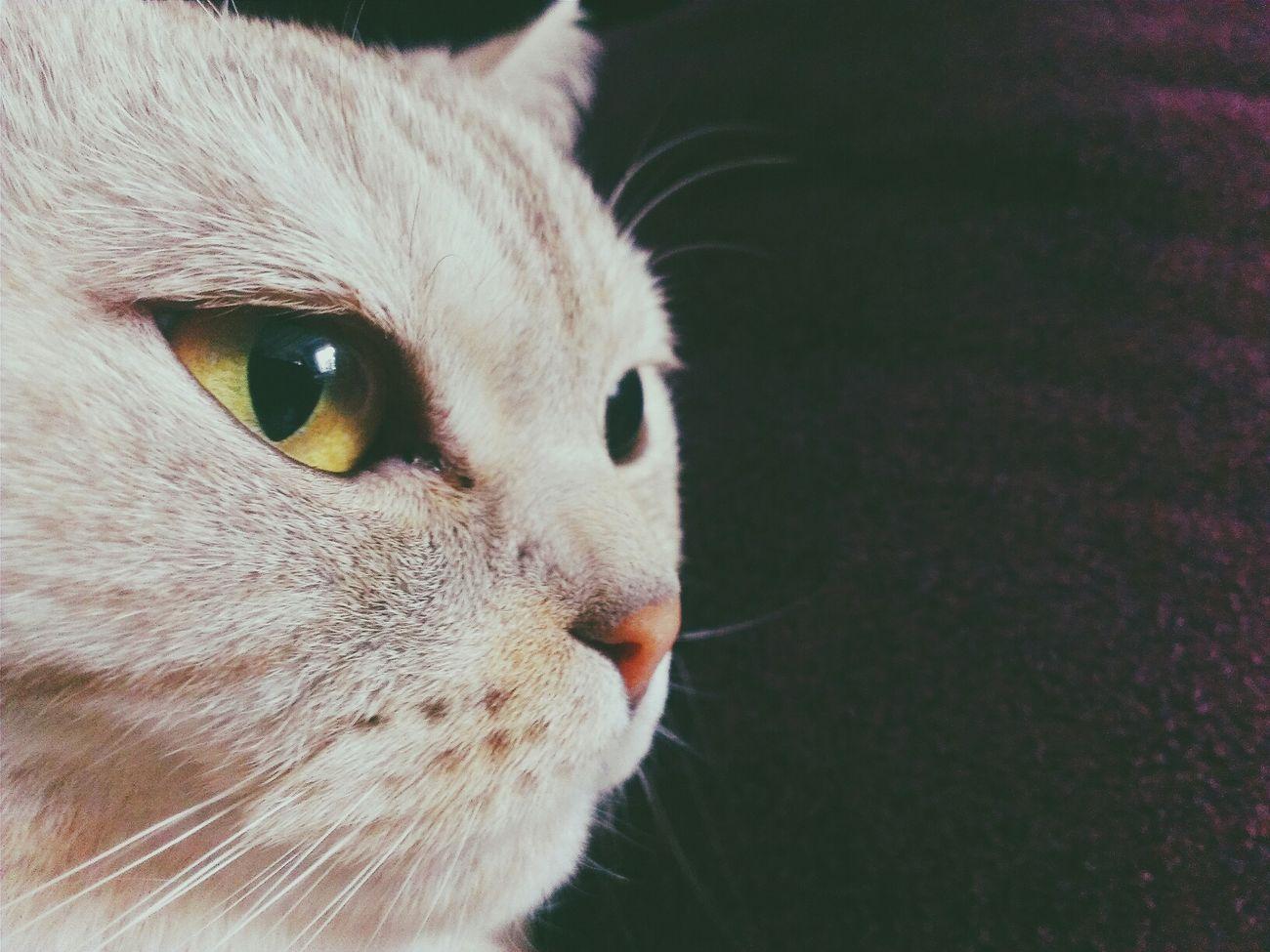 Cat Pet VSCO