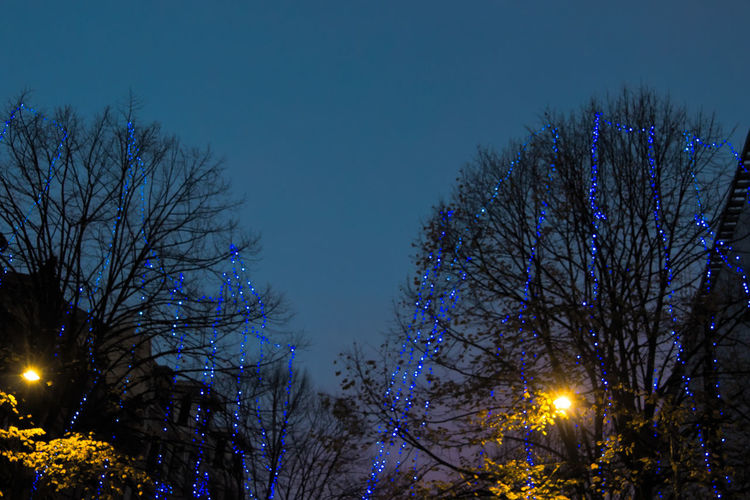 Street Photography Twighlight Through The Trees Sky Blue Tree City Illuminated Bare Tree Branch Christmas Lights Sky Christmas Ornament Christmas Decoration Christmas Holiday Moments