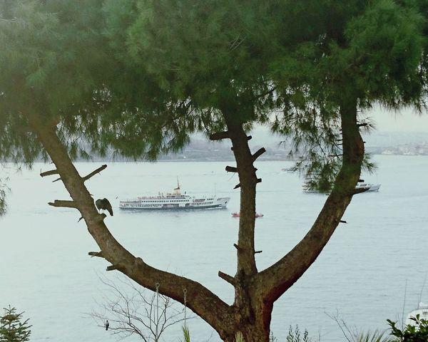 Doğal pencere Bosphorus