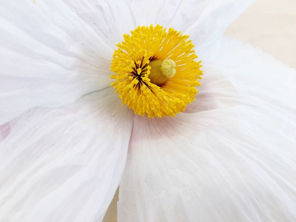 Gatden Flower Flowering Plant Plant Yellow Freshness Fragility Flower Head Vulnerability  Petal Close-up Inflorescence White Color Beauty In Nature Pollen Nature No People Full Frame Daisy Growth Softness