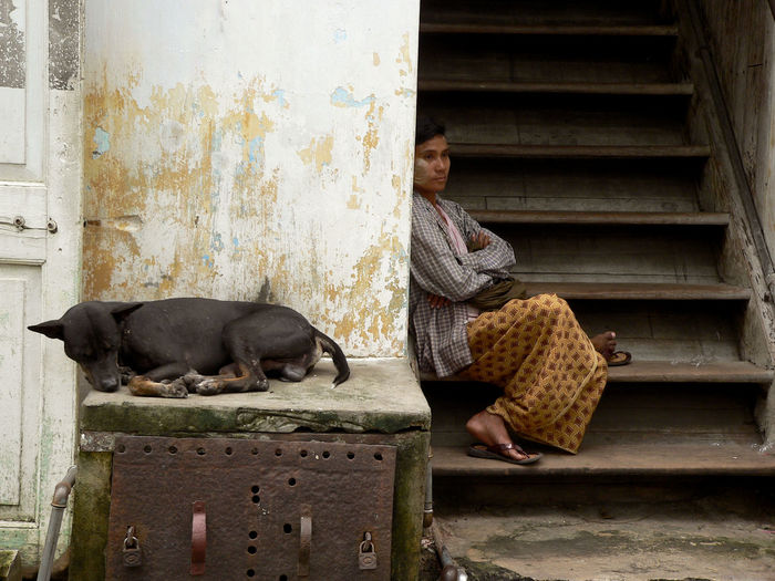 Afternoon Rest Animal Themes Asian Culture Dogs Dogslife Domestic Animals Pets Relaxation Resting Yangon, Myanmar
