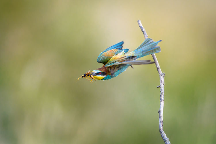 Close-up of a bird and an insect on twig