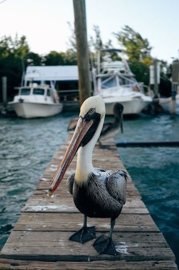 Close-up of pelican on pier over sea