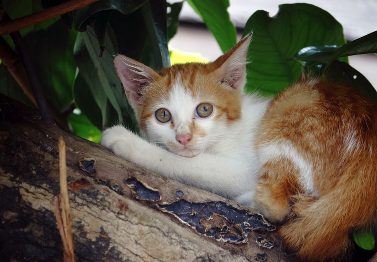 Domestic Cat Cat Pets Feline Domestic Animals Looking At Camera Mammal Domestic Portrait Vertebrate One Animal No People Leaf Plant Part Close-up Relaxation Whisker Animal Eye