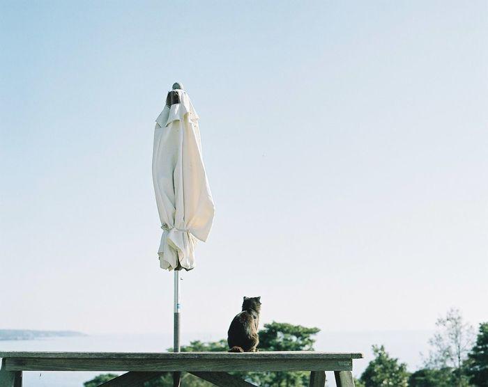 Film Japan EyeEm Best Shots Cat Photography Camera 120 Film Pentax