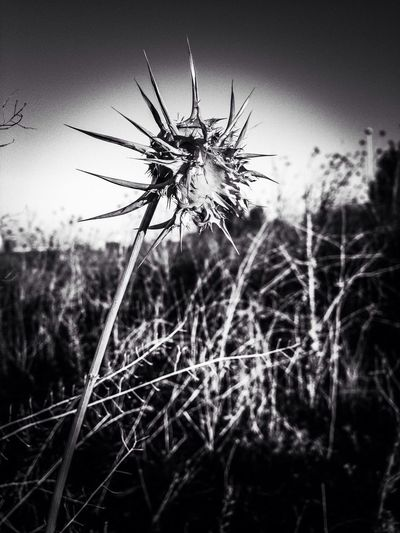 Winter is coming and it's waiting. Black And White Blackandwhite Nature Flowers