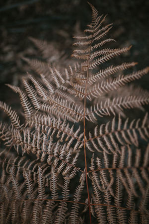 Fern Wallpaper Backgrounds Background Texture Fern Leaves Plant Nature Winter Texture Outdoors Vulnerability  Fragility Full Frame Growth No People Pattern Natural Pattern Day Focus On Foreground Selective Focus Beauty In Nature Close-up