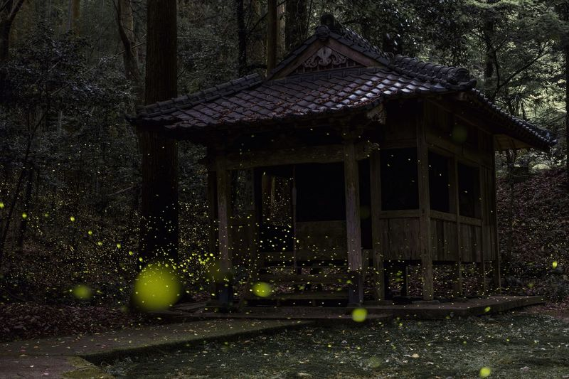 Beauty In Nature Eye Em Nature Lover Architecture Day No People Nature Firefly Japan Long Exposure Night