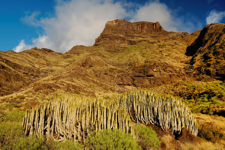 Saguaro Cactus Growing On Rocky Mountain Against Sky