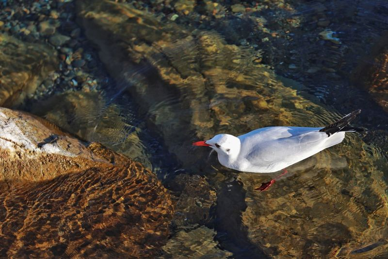 Animal Animal Themes Animals In The Wild Animal Wildlife Vertebrate Bird Water High Angle View One Animal No People Sea Solid Day Seagull White Color