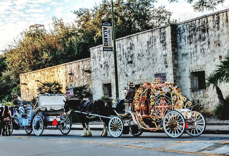 tourism Streetphotography Horsecarriage Traditions & Rituals Land Vehicle Stationary Built Structure Architecture