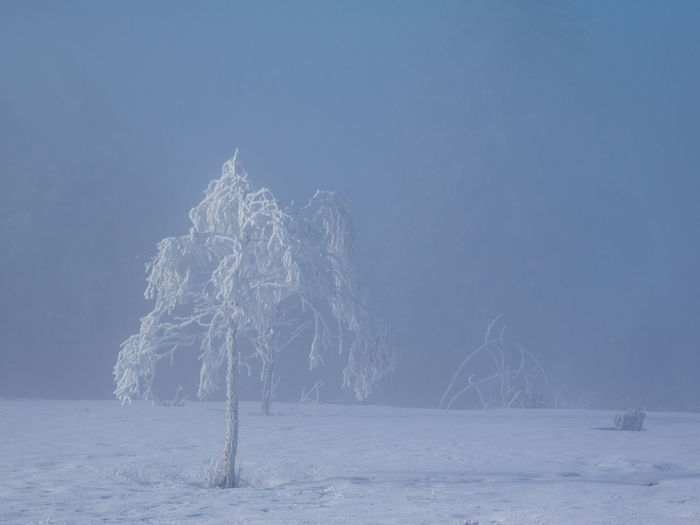 Firework display over frozen trees against clear sky