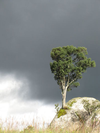 Rock Tree Growth Green Color Grey Sky Isolated Condolence Copy Space Hope Nature No People Tranquility Upright Postcard New Life Single Tree A New Perspective On Life EyeEmNewHere