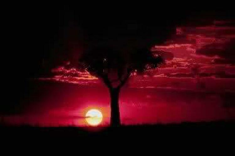 Sunset.Western Australia. The Week On EyeEm
