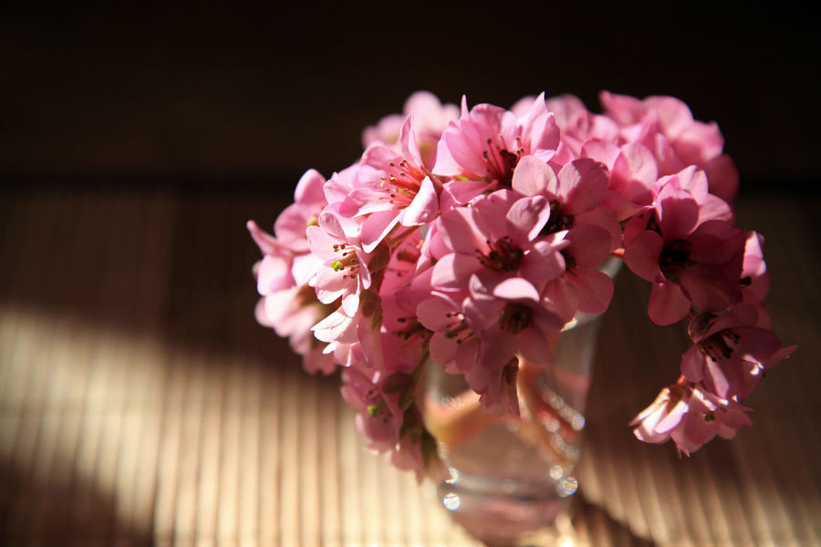 Cherry blossom in small glass vase Cherry Blossom Beauty In Nature Bouquet Close-up Flower Flower Arrangement Flower Head Fragility Freshness Glass Growth Indoors  Nature No People Petal Pink Color Plant Pollen Selective Focus Softness Table Vase