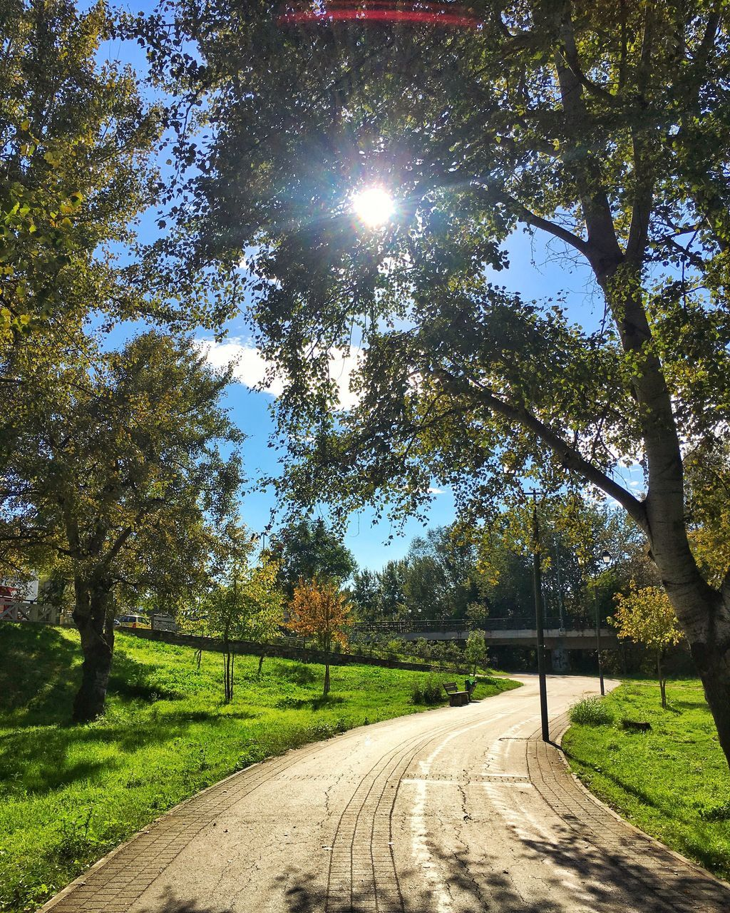tree, road, the way forward, sunlight, transportation, sunbeam, day, lens flare, nature, no people, sun, tranquil scene, outdoors, scenics, tranquility, growth, landscape, beauty in nature, sky