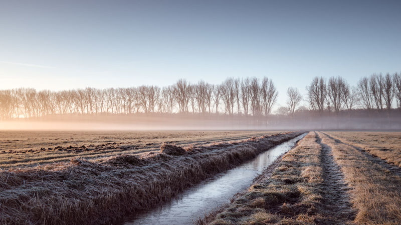 Golden Morning mist rolling over a frozen field in Brandenburg, Germany Agriculture Beauty In Nature Brandenburg Cold Temperature Day Fog On Field Frozen Frozen Field Germany Ice Landscape Misty Sunrise Nature No People Outdoors Philipp Dase Scenics Sky Snow Sunset Teltow-flaeming Tree Water Winter Winter 2016